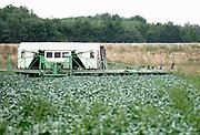 Nedrland, Stevensbeek,16-6-2020   Oost-europese arbeiders oogsten broccoli. Deze wordt meteen verpakt in de tent achter hun en opgelagen in een aanhanger die weggebracht wordt naar de koeling  als die vol is. FOTO: FLIP FRANSSEN