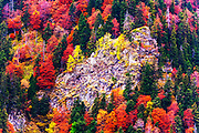 Colorful trees in an autumn forest