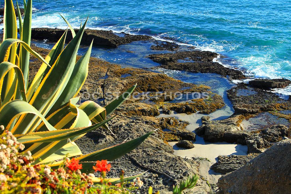 Tide Pools and Coastal Landscape of Laguna Beach California