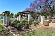 Rose Garden at City Hall Park Brea