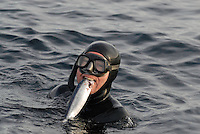 Diver with a herring (Clupea harengus) killed by a Killer whale (Orcinus orca) in his mouth, Kristiansund, Nordmøre, Norway.