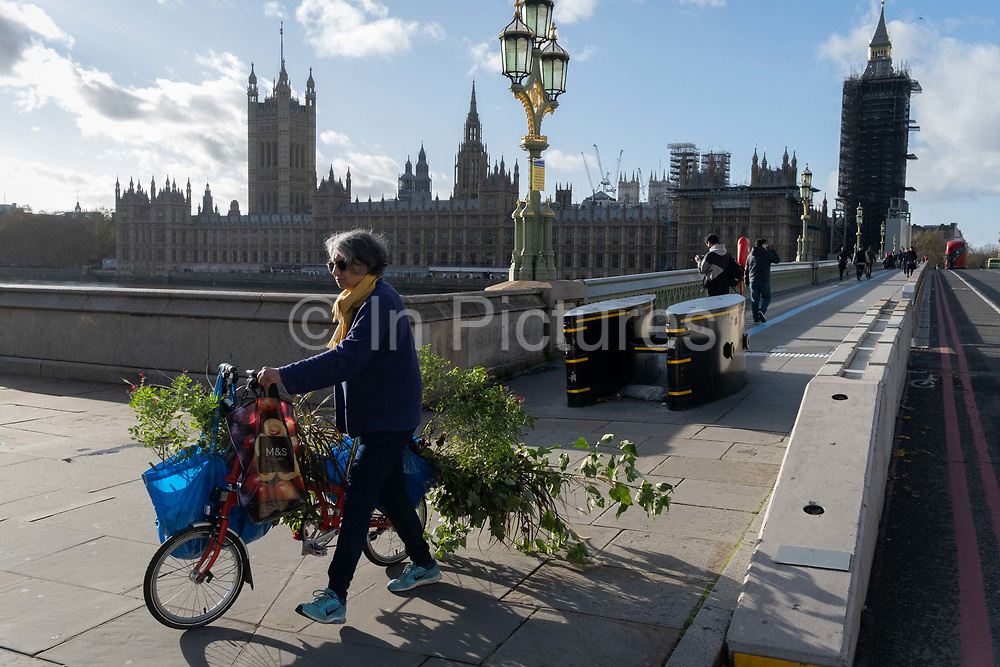 With the Houses of Parliament in the distance, a woman pushes her bike across Westminster Bridge, laden with an awkward load of plants and shrubs, on 12th November 2020, in London, England.