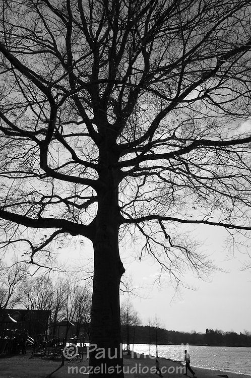 A father and son and tree silhouette on the southern shore of Lake Quannapowitt, Wakefield, MA