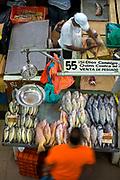 Fish Vendor Prepares A Sale At The Fish Market In Panama City, Panama