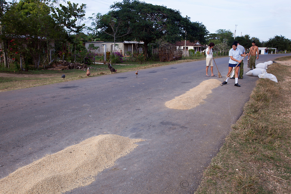 Drying rice on the road in Cuba.