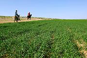 Israel, Negev, horsemen