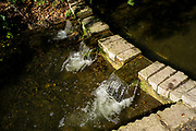 Maidenhead, Berkshire, United Kingdom, Tuesday,  12/10/2021,  General View, Small Water Feature Ray Mill Island,  River Thames, Thames Valley, [Mandatory Credit; Pete Spurrier],