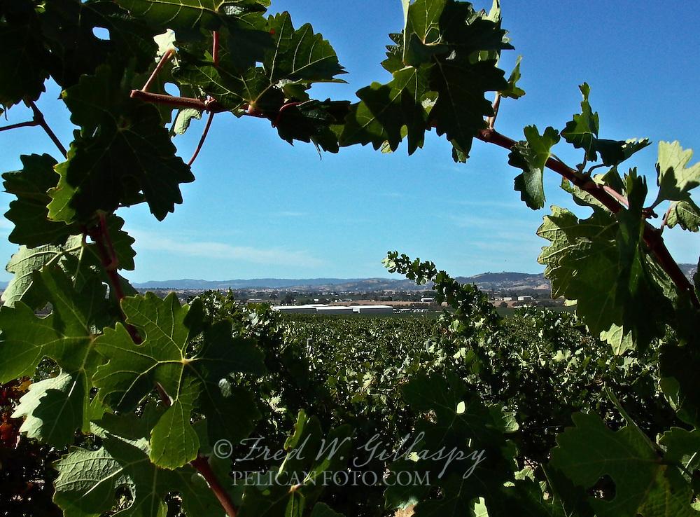 Paso Robles Vineyards - J. Lohr - Eastside