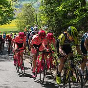 Amstel Gold Race 2019