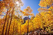 Autumn Aspens & Maroon Bells Colorado