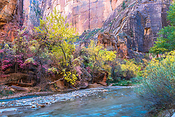 The reds and golds of autumn dress up the already beautiful Zion Canon and Virgin River in Zion National Park.
