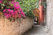 An alleyway with flowering bougainvillea vine in the colonial UNESCO world heritage town of San Miguel de Allende, Mexico.