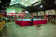 Empty ring with dog walking past. Lucha Libre wrestling origniated in Mexico, but is popular in other latin Amercian countries, including in La Paz / El Alto, Bolivia. Male and female fighters participate in the theatrical staged fights to an adoring crowd of locals and foreigners alike.