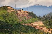Palm Oil plantations seen from Ranau to Sepilok near A4 road, north Sabah, Borneo, Malaysia