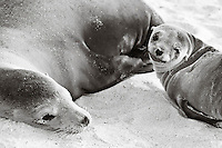 Animals, seals. <br />