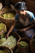 Myanmar, Burma, Inle Lake, cheroot making