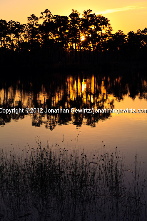 The morning sun rises behind an island of slash pines in the lake at Long Pine Key campground in Everglades National Park, Florida. WATERMARKS WILL NOT APPEAR ON PRINTS OR LICENSED IMAGES.