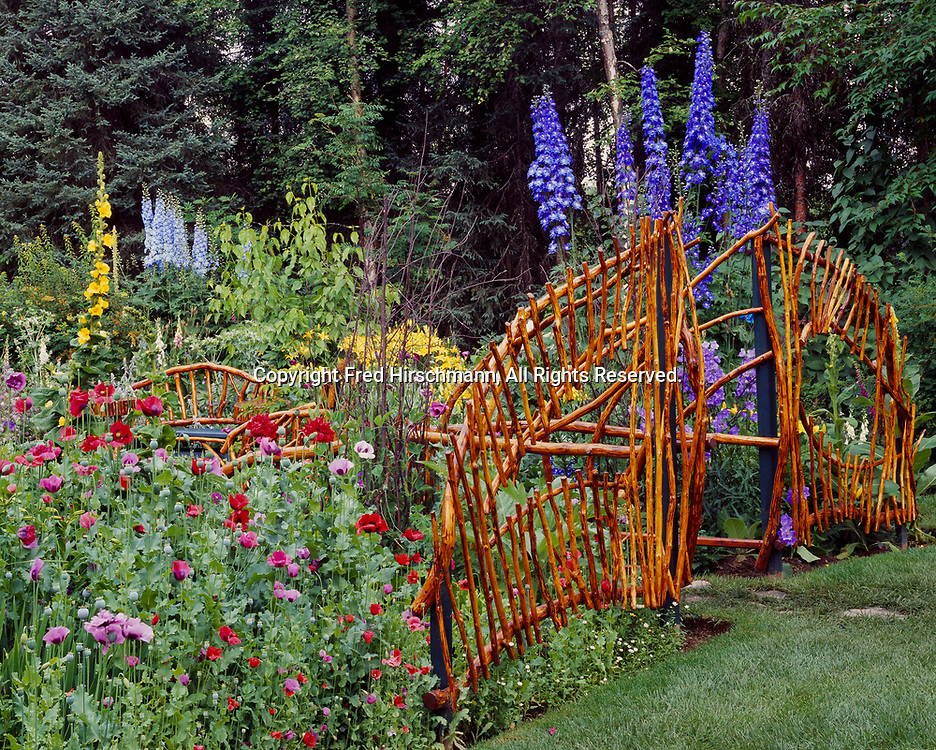Les Brake's Coyote Gardens, Willow, Alaska in summer bloom including Poppies, Papaver somniferum, Mullein, Verbascum electric yellow, Chrysanthemum paladosum, Peach Leaf Bellflower, Campanula persicifolia, and Delphinium elatum hybrids.