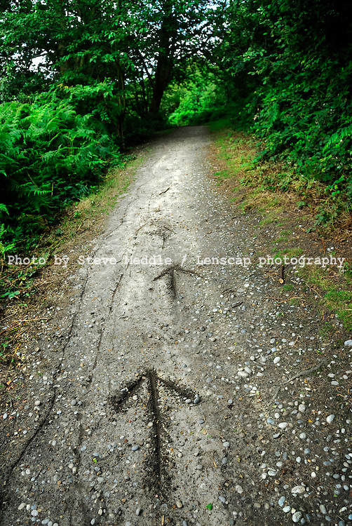 Arrows Drawn in the Ground
