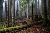 Rural Northwest & Cascades