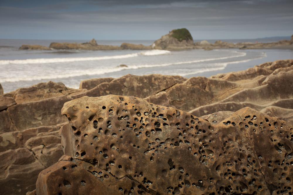Piddock Clam Pocked Sandstone Cliffs at Kalaloch Beach 4, Olympic National Park, Washington, US