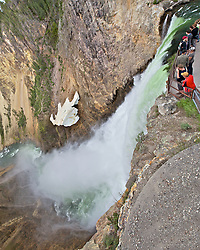 Brink of Lower Yellowstone Falls, Grand Canyon of the Yellowstone, Yellowstone National Park. Lower Yellowstone Falls is 308 feet tall.