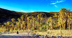 An oasis on the Tizi N'Tazezert trail<br /> <br /> (c) Andrew Wilson   Edinburgh Elite media