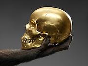skull in chimp's hand