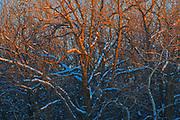 Last light on trees<br />Birds Hill Provincial Park<br />Manitoba<br />Canada