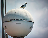 Yellow-legged Seagull on a radar antenna at the port of Casablanca, Morocco. Viewed from the deck of the MV World Odyssey. Image taken with a Nikon N1V3 camera and 70-300 mm VR lens.