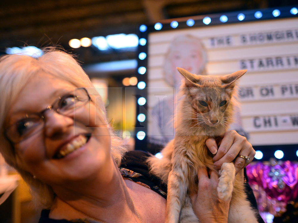 © Licensed to London News Pictures. 24/11/2012. Birmingham, UK Chi Wow Wow wins best of breed. Cats are shown by their owners and breeders at The Supreme Cat Show held by the Governing Council of Cat Fancy at the National Exhibition Centre in Birmingham today, 24 November 2012. The Cat Show is one of the largest cat contests in Europe with over one thousand cats being exhibited and judged. Photo credit : Stephen Simpson/LNP