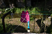 A pink duster and paint brush dry in morning village sunlight, on 26th May, 2017, in Termes, Languedoc-Rousillon, south of France.