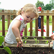 A young girl digging in the vegetable garden at Little Green Rascals Children's Organic Day Nursery, nr Elvington, York, North Yorkshire, UK. Little Green Rascals is a children's day nursery that opened in York in July 2009.  It is the first fully organic day nursery in the North of England and has been awarded the Soil Association's Gold Catering Mark for the last four years.