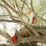 "Teenage girl sits below a tree. Cloth attached on tree, for good luck, at the pre-islamic shrine named ""Saïd Brom"".  The traditional life of the Wakhi people, in the Wakhan corridor, amongst the Pamir mountains."