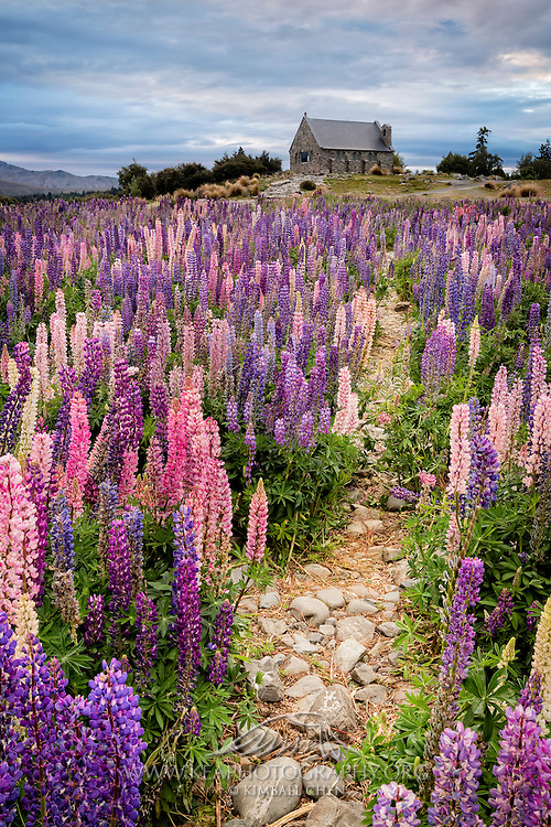 If you're going to church this weekend, here's the path to take!  Or better yet, maybe a church day outside amongst the beautiful lupins and calm skies!