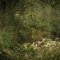 Knettishall Heath. More experimenting with multiple exposurses.