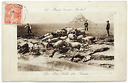 French postcard of Mont Saint Michel with sheep herd and stamp