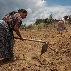 Vegetable farming, Guatemala