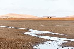Sand dunes and pool of water, Erg Chebbi, Saharan Desert, Morocco