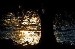 Silhouette of a tree along the banks of the Frio River at sunset in the Texas Hill Country