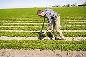 Bowles Farming Co
