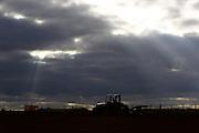 Sao Gotardo_MG, 22 de maio de 2015<br /> <br /> Fotos dos produtores de cenoura na regiao de sao gotardo.<br /> <br /> Foto: MARCUS DESIMONI / NITRO