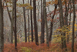 Fall foliage and trees in a forest