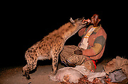 "With the arrival of night ""Hyena Men"" - as they are known in Harar - chant the names of the hyena, bringing them down from the hills to the edges of the town, enticing them to take food often from the Hyena Man's mouuth. The origins of this bizarre practice are said to come from encouraging the animals to take food from the hyena men rather than attacking local cattle."