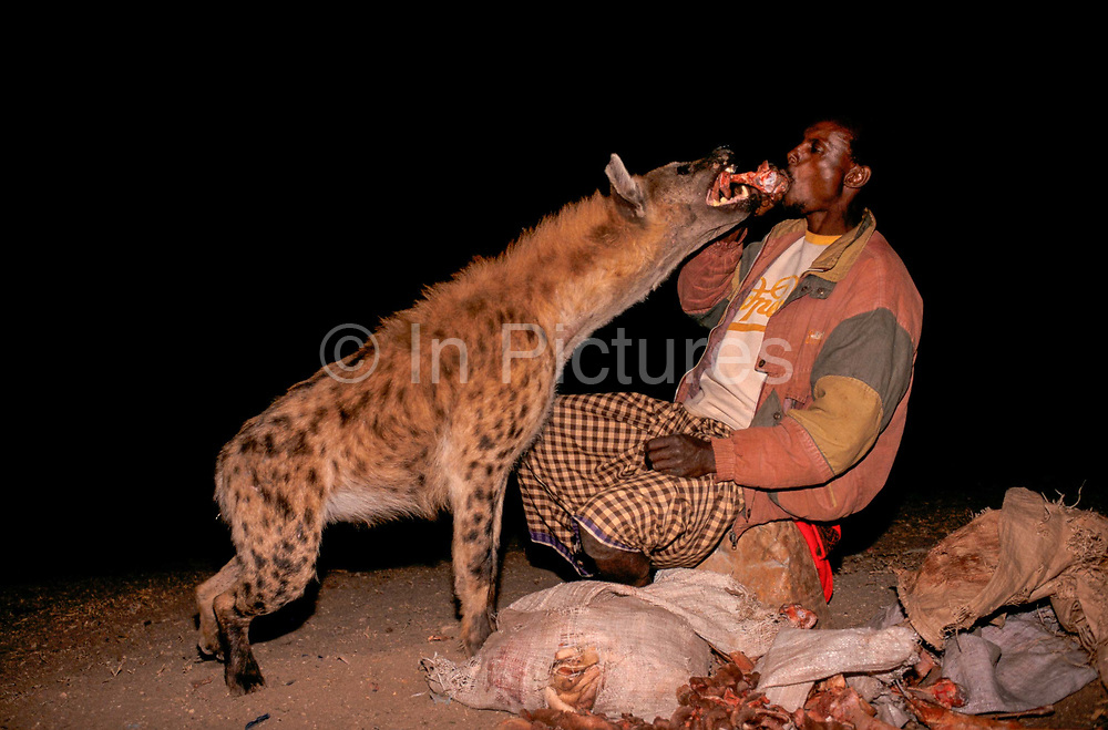 """With the arrival of night """"Hyena Men"""" - as they are known in Harar - chant the names of the hyena, bringing them down from the hills to the edges of the town, enticing them to take food often from the Hyena Man's mouuth. The origins of this bizarre practice are said to come from encouraging the animals to take food from the hyena men rather than attacking local cattle."""