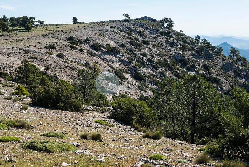 Sierra del Cujón. Parque Natural de los Calares del Mundo y de la Sima. Sierra del Segura. Albacete ©ANTONIO REAL HURTADO / PILAR REVILLA