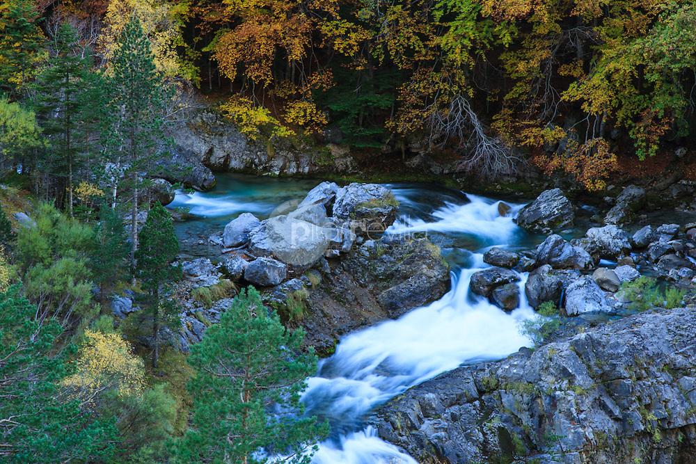 Hayedo. Ordesa. Huesca. Aragon. España. Europa<br />  ©Tomás Calle / PILAR REVILLA