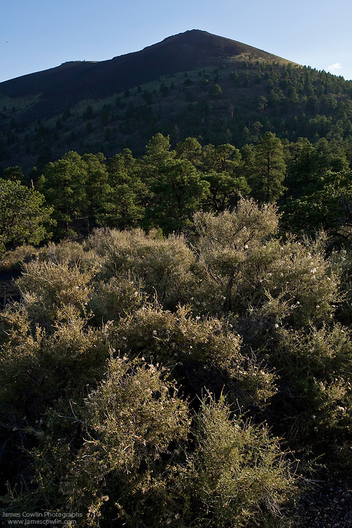 Sunset Crater with backlighted bushes from the Cinder Hills Overlook