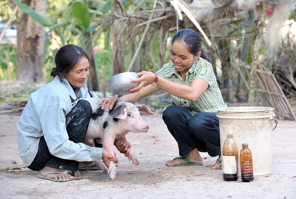 Nob Chan (right) uses EM concentrate (effective micro organism) to wash her pig, keeping the animal healthier. Helping her is her sister in law, Chum Chan. They live in Khnach, a village in the Kampot region of Cambodia.
