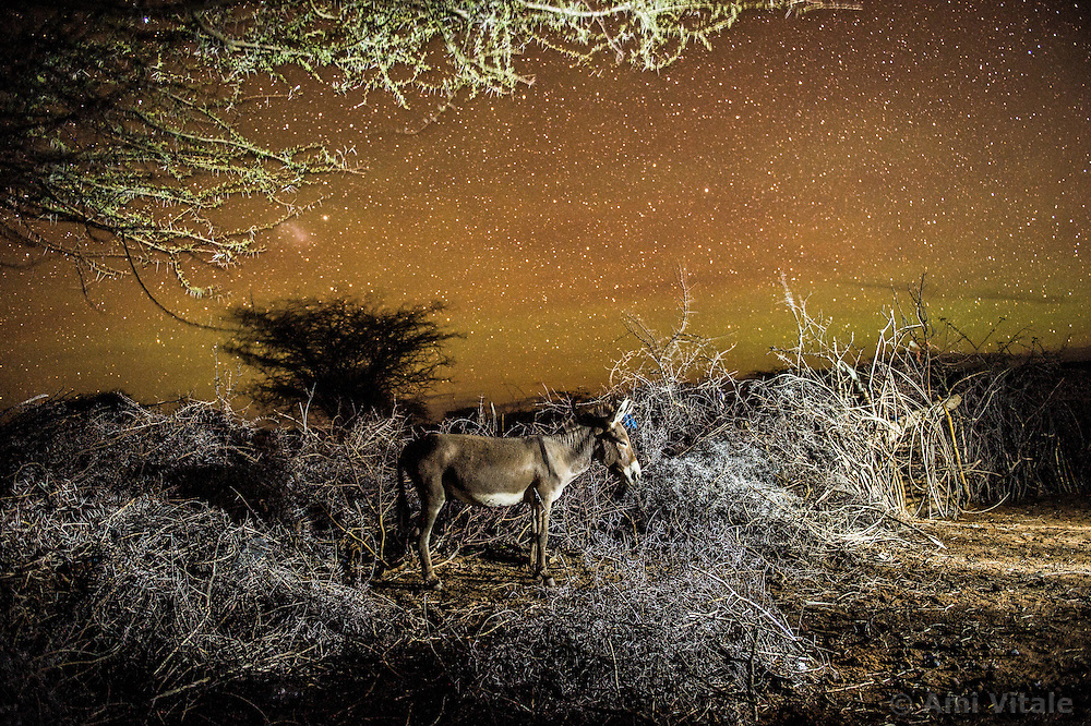 A donkey sleeps under a dark sky in Melako, an arid landscape that stretches towards the Ethiopian and Somali border. Rainfall is rare, as are permanent settlements and solid infrastructure. It is no wonder that there is ethnic conflict and cattle rustling here considering the tough conditions. <br />